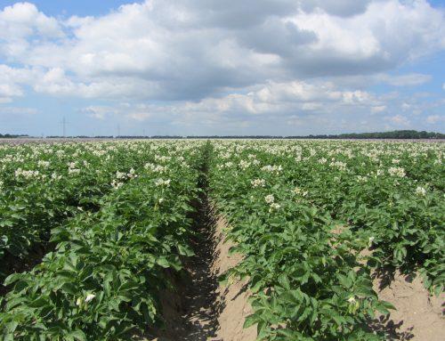 hygiëneprotocol voor aardappelmoeheid